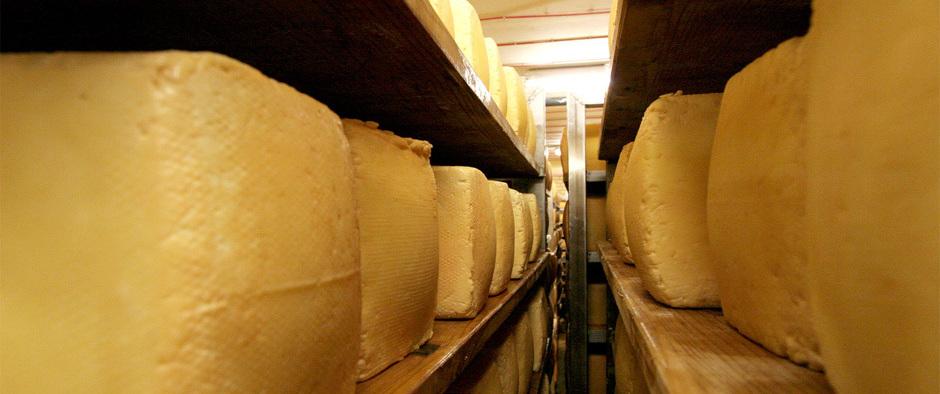 Gang mit Käseregalen
